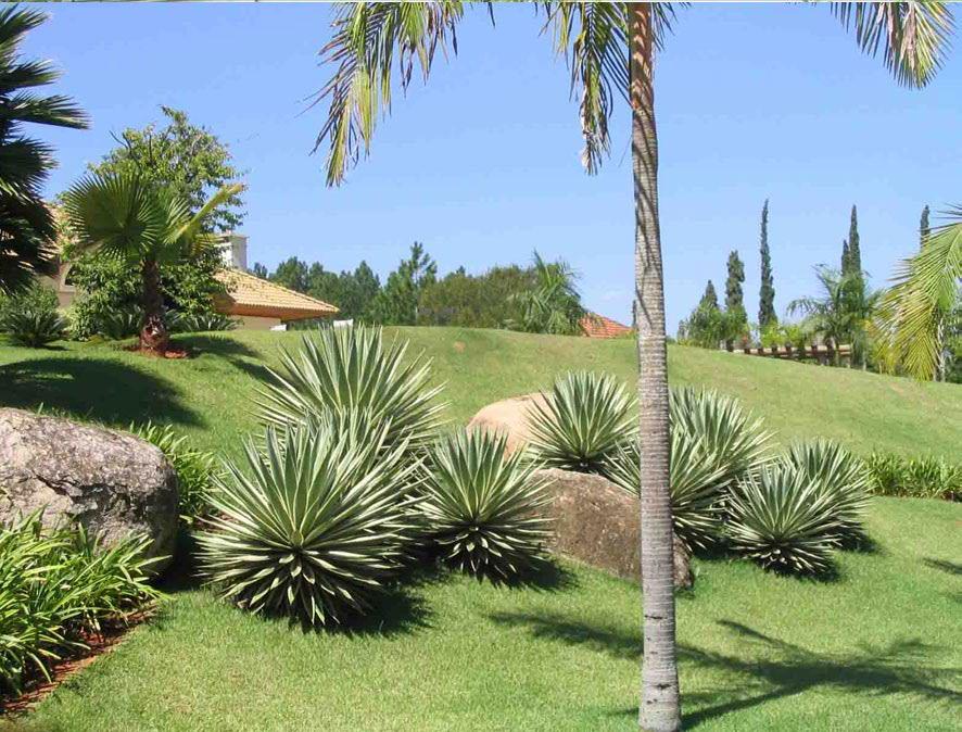 Tipuana jardins paisagismo e jardinagem porto alegre for Paisagismo e jardinagem
